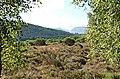 Near Loch Pityoulish - geograph.org.uk - 212060.jpg