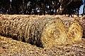 Needle in a haystack (2425404674).jpg