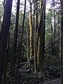Nelson Falls Walking Trail Tasmania.jpg