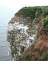 Nettle Trip, Bempton - geograph.org.uk - 813676.jpg