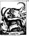 Neue nordische Beyträge zur physikalischen und geographischen Erd-und Völkerbeschreibung, Naturgeschichte und Oekonomie (microform) (1783) (20622096182).jpg