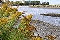Nicomekl river, with heron (9604862663).jpg