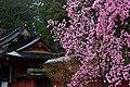 Nikko Futarasan Jinja (2496538564).jpg