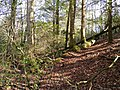 Nimblewill Creek - panoramio.jpg