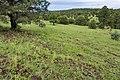 North-northwest of Cooney Prairie - Flickr - aspidoscelis.jpg