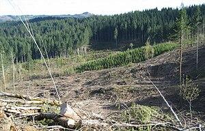 Northern Oregon Coast Range - Logging in the mountains