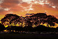 Nossa Brasília - Pôr do Sol (18939766603).jpg