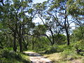 OIC bunbury maidens hill 1.jpg