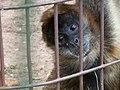 Oaklawn Farm Zoo, May 16 2009 (3539706518).jpg
