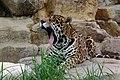 Oji zoo, Kobe, Japan (3394521656).jpg
