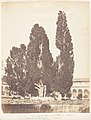 Old Cypress Trees in Carthusian Convent, Rome MET DP143541.jpg