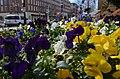 Old Town Flowers (6819919384).jpg