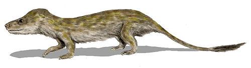 Oligokyphus