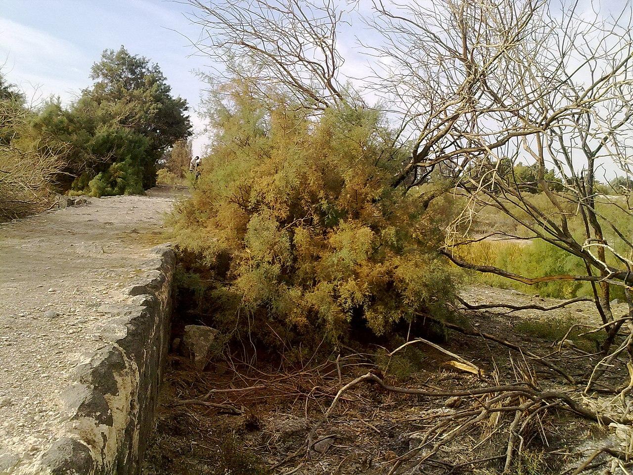 Omayyad walls in Azraq.jpg