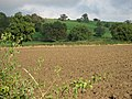 One Of The Howardian Hills - geograph.org.uk - 266668.jpg