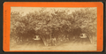 Orange archway, from Robert N. Dennis collection of stereoscopic views.png
