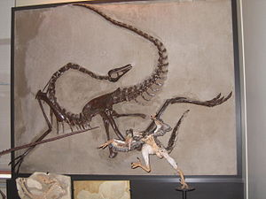 Dromiceiomimus - Skeleton at Canadian Museum of Nature