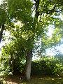 Orto botanico di Napoli 230.JPG