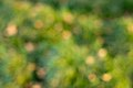 Out of Focus Green Backgounds-2.jpg