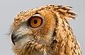 Owl 2 (6942390097).jpg