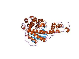 Nicotinate-nucleotide—dimethylbenzimidazole phosphoribosyltransferase class of enzymes