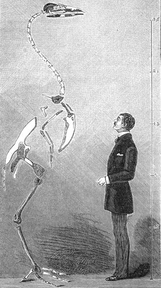 Gastornis -  Lemoine's incorrect 1881 illustration of G. eduardsii (now G. parisiensis)