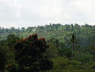 Tabanan Regency - Pacung mountain resort