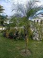 Palma's in Cuba-Laslovarga (7).JPG