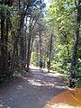 Parc-nature du Bois-de-l-ile-Bizard 55.jpg