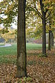 Parco Nord Milano by Stefano Bolognini1.JPG