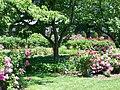 Pardee Rose Garden.jpg