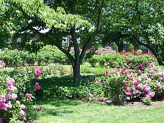 East Rock Park - Image: Pardee Rose Garden