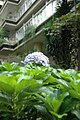 Parque das hortênsias (3415393989).jpg