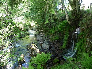 Afon Tarell - Upper reaches of Afon Tarell