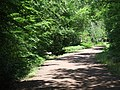 Path in Epping Forest - geograph.org.uk - 2523501.jpg