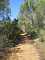 Path to Cala Trebaluger (30097417466).jpg
