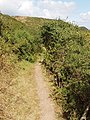 Path to Porth Mear, with blackthorn - geograph.org.uk - 224563.jpg