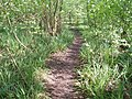 Paths in the woods - geograph.org.uk - 430851.jpg