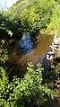 Patos em lagoa natural.jpg