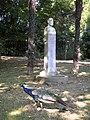 Pauma kristinaenea 001.JPG