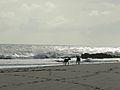 Pegadas na areia da praia.jpg