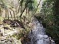 Pentre Coed Dingle - view downstream - geograph.org.uk - 486498.jpg
