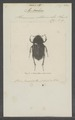 Peritrichia - Print - Iconographia Zoologica - Special Collections University of Amsterdam - UBAINV0274 020 01 0005.tif