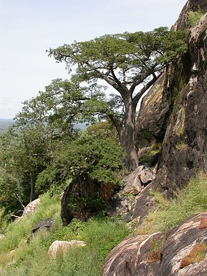 Sudanian Savanna - Image: Pic de Nahouri MS4263