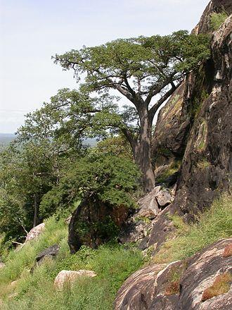 Sudanian Savanna - Sudanian Savanna vegetation in Burkina Faso