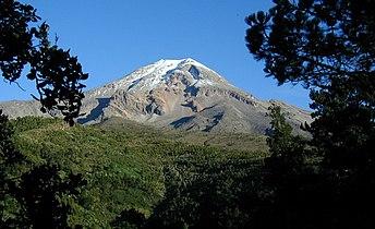 Pico Orizaba Pines.jpg
