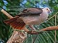 Pink Pigeon RWD4.jpg