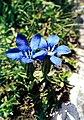 Pirineos, flora 1981 32.jpg