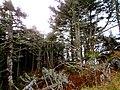 Pisgah National Forest (8143248265).jpg
