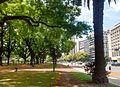 Plaza República de Chile, Buenos Aires, Palermo, Tipuana tipu 01.jpg